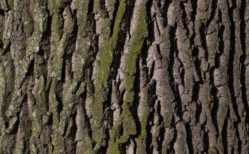 Przepiękny oraz {zadbany zieleniec to nie lada wyzwanie, zwłaszcza jak jego konserwacją zajmujemy się sami.